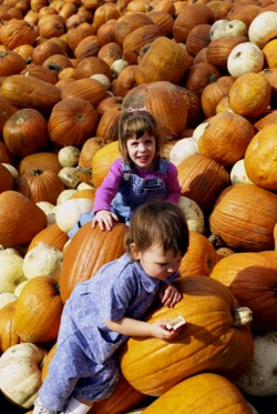 Schnepf Farms Pumpkin and Chili Festival is a great homeschool field trip